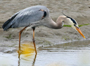 Caring.com User - Birder